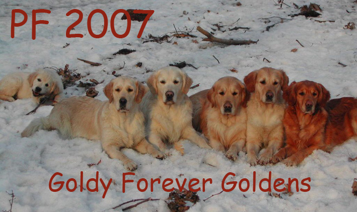 Štastné a spokojení prožití Vánoc a vše nejlepší do Nového roku 2007 Vám přejí všichni z rodiny GOLDY FOREVER // We wish you Merry Christmas and happy New Year 2007 !!!